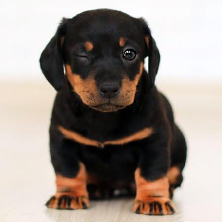 winking puppy