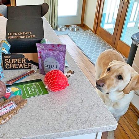 dog with barkbox super chewer