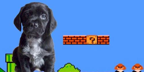 nerdy dog names thumbnail