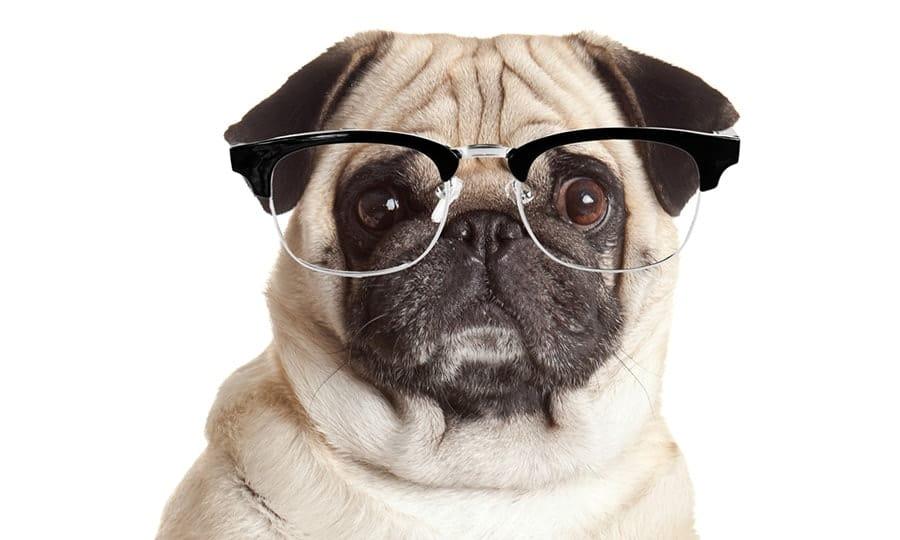 nerdy dog with glasses - nerdy dog names