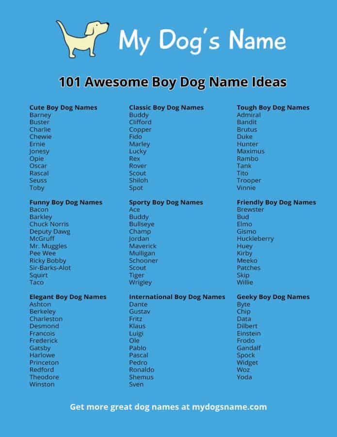 Dog Names Infographic