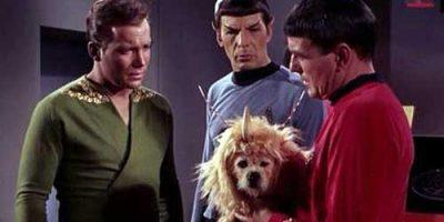 doc-kirk-spock-dog