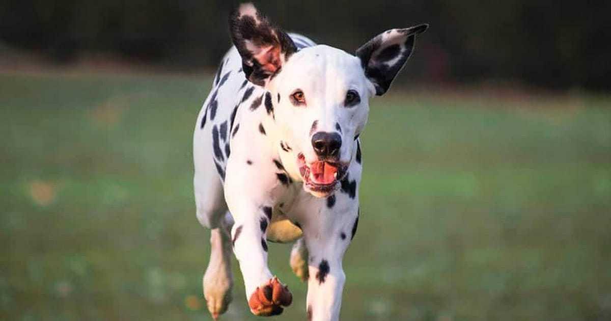 101 Dalmatians Dog Names