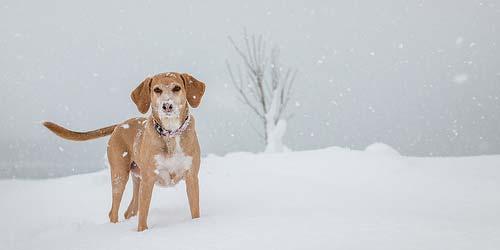 winter dog names thumb