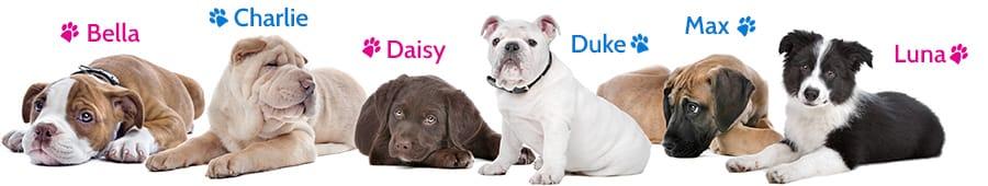 puppy dog names