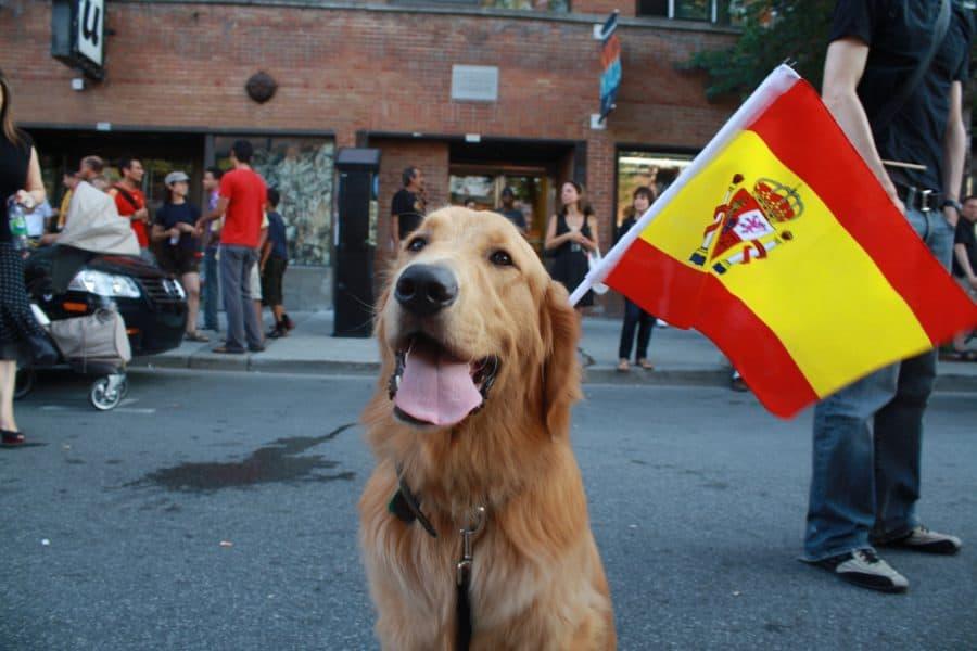 Spanish dog names - dog with Spanish flag