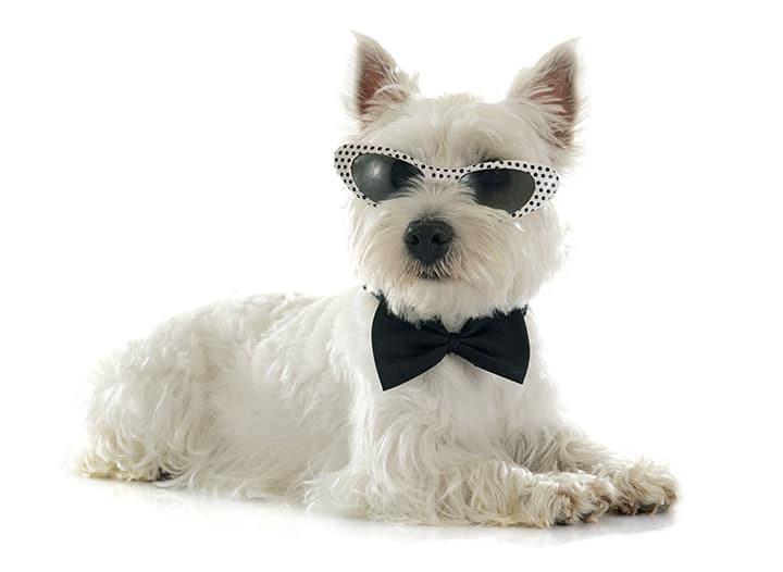 Top Trendy Dog Names 2