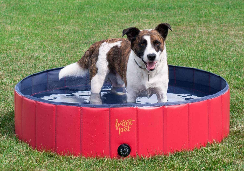 Pet_pool