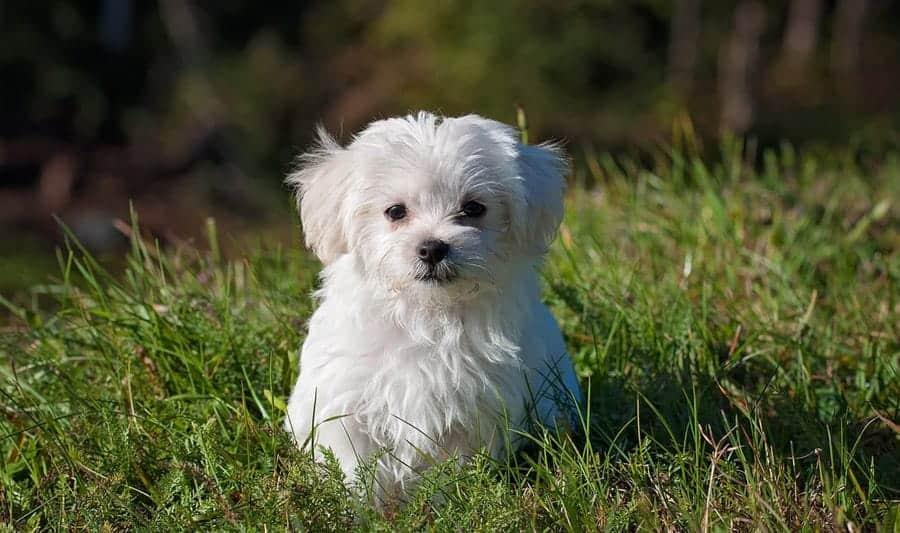 cute white dog in grass