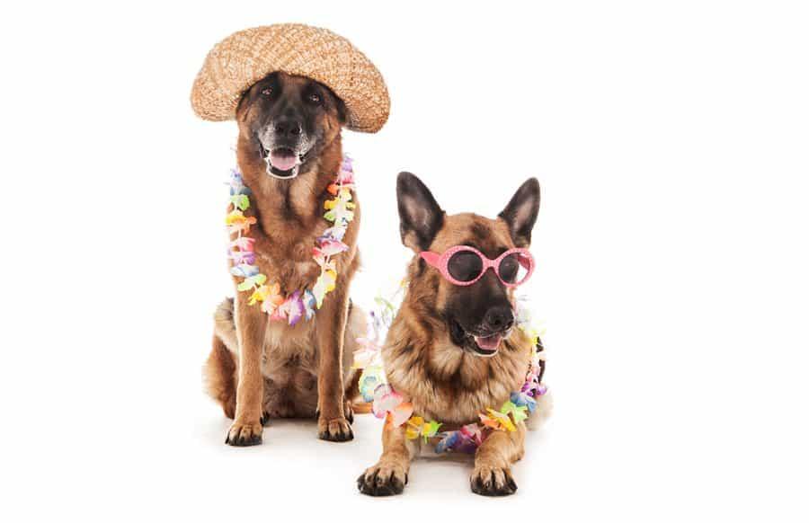 unique dogs in hawaiian costumes