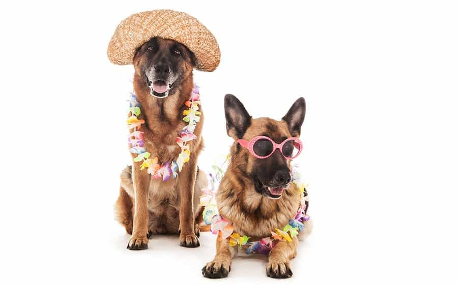 Dog ready for beach