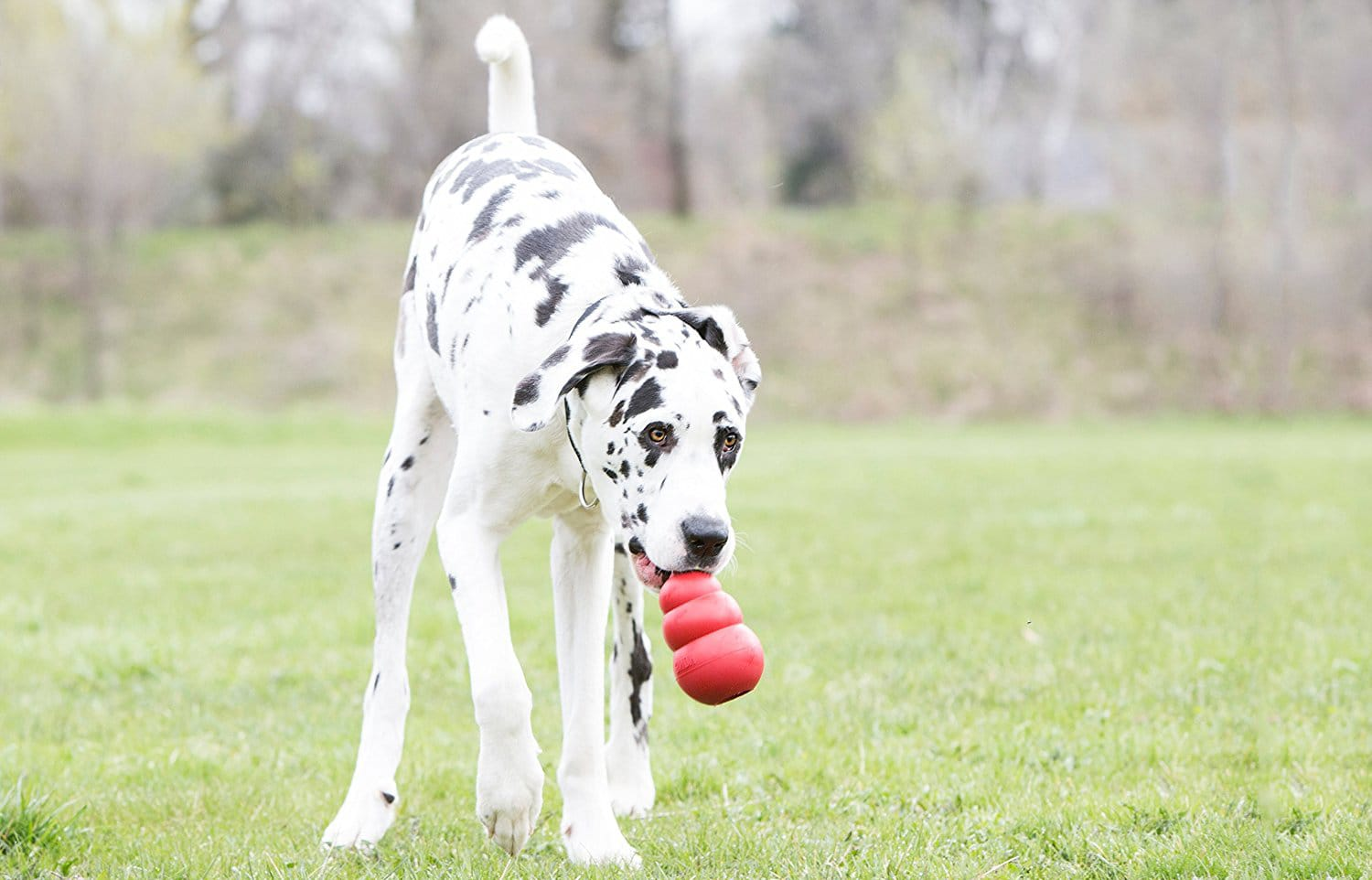 Best Toys for Big Dogs
