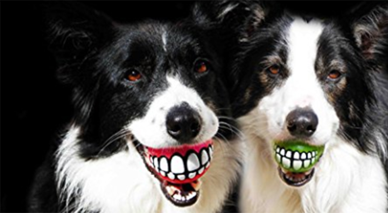 Funny dog Christmas gifts