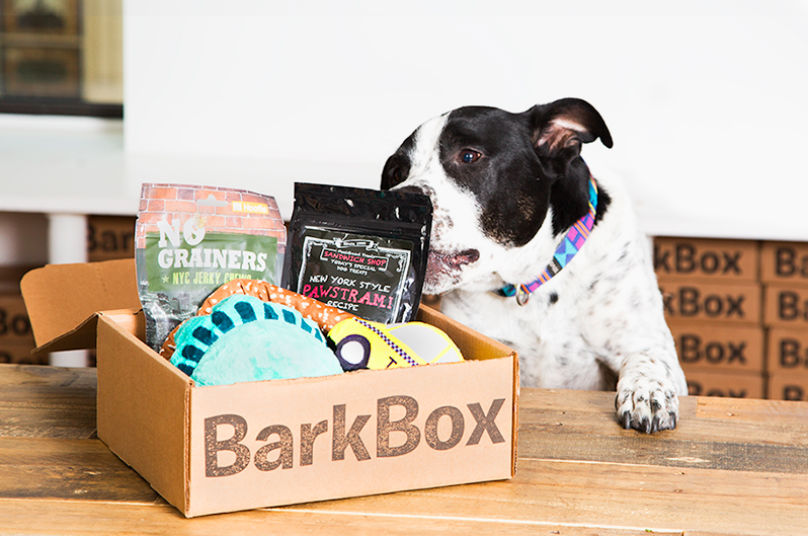 barkbox with dog