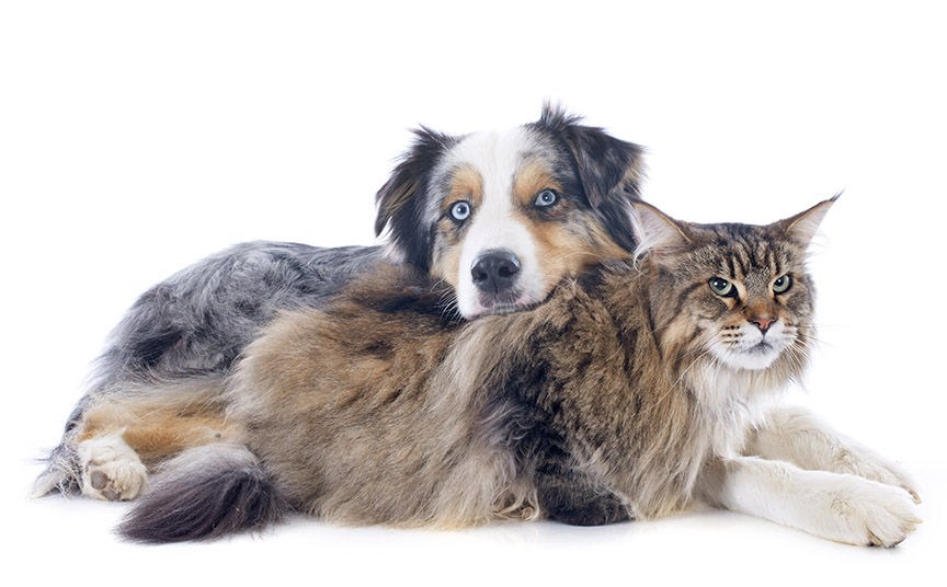 cats-vs-dogs-2