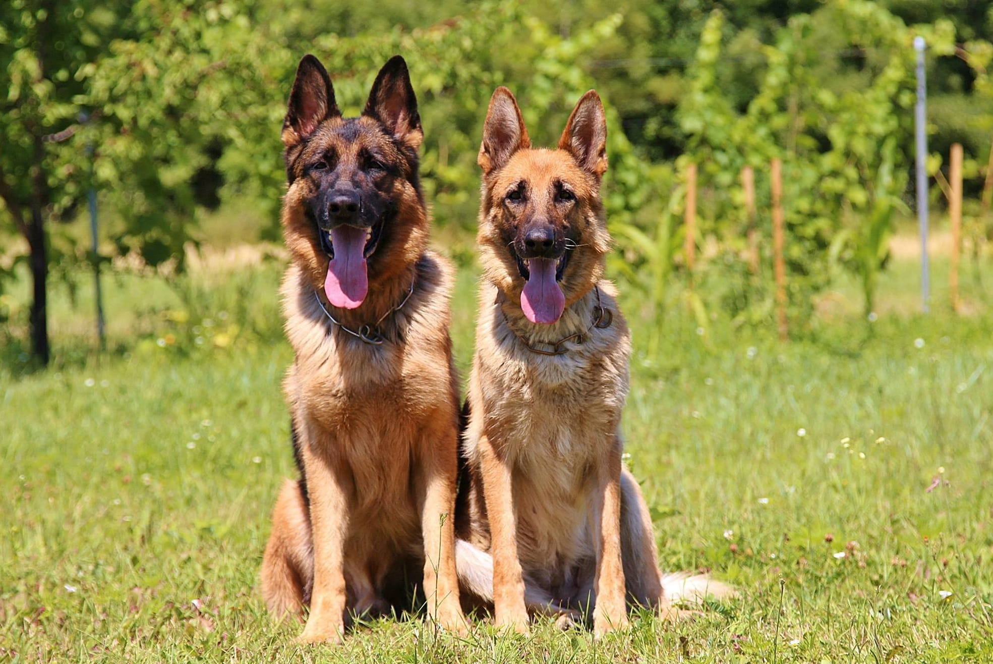 dogs-888415