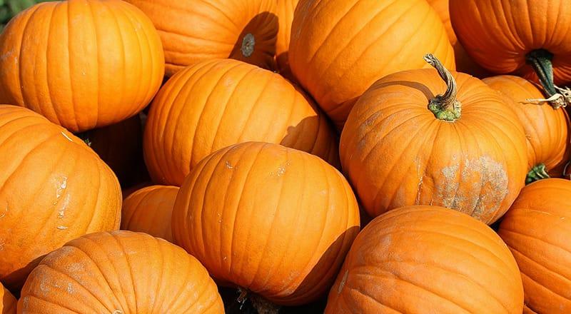 pumpkins-457716_1920