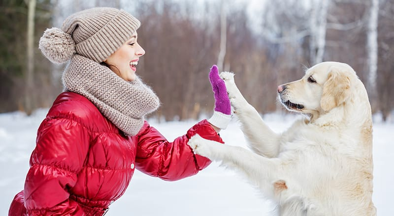 protect dog paws in winter - dog in snow