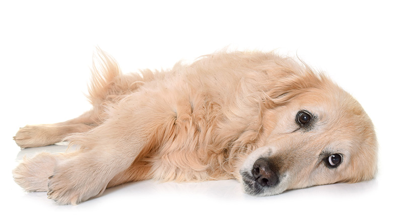 8 Ways You're Seriously Hurting Your Dog's Health Without Realizing It