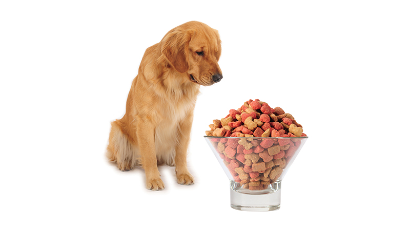 dog with giant bowl of food