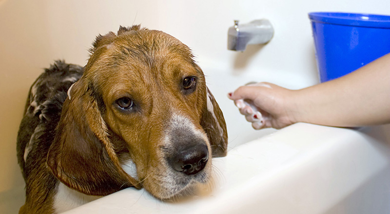 What To Do When Your Dog Hates Taking A Bath