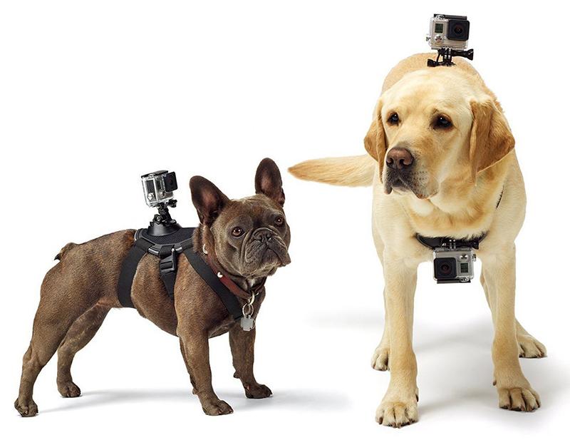 go pro dog mount