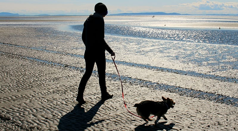 20 Simple Ways To Spend More Time With Your Dog