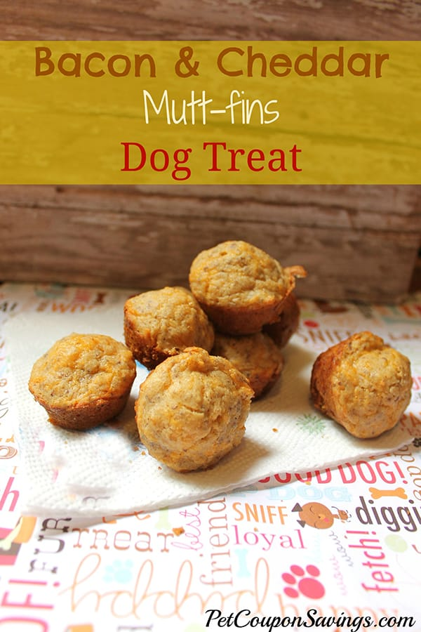 10 Cheesy Dog Treat Recipes To Spoil Your Pup