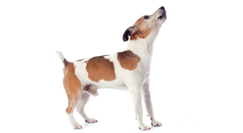 10 Genius Ways To Get Your Dog To Stop Barking