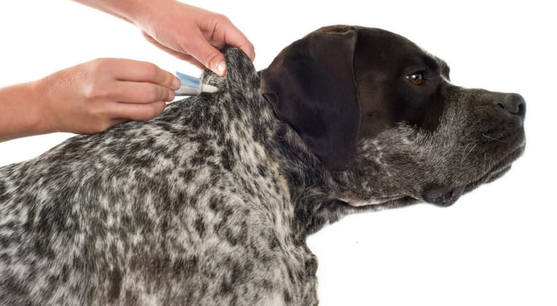 prevent ticks on dogs