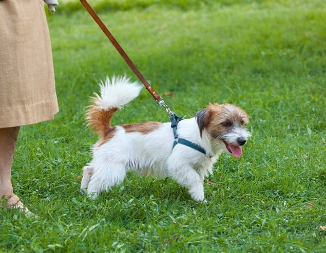 Training & Socializing Your New Puppy