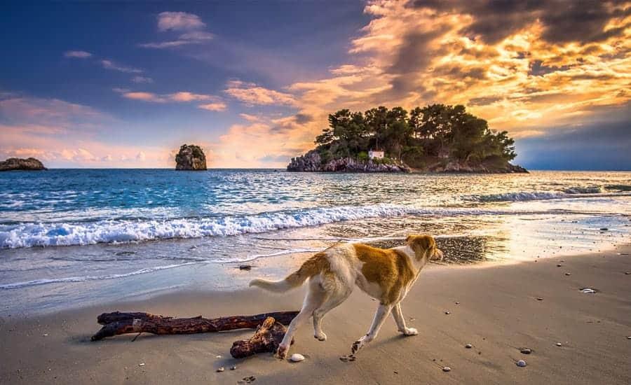 dog on greek beach
