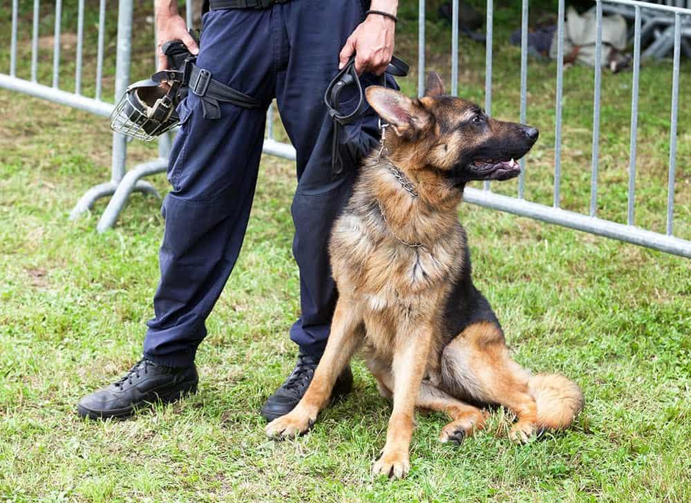 Police Dog Names