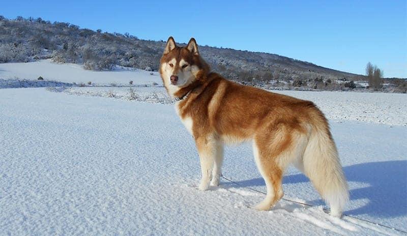 Russian Dog Names