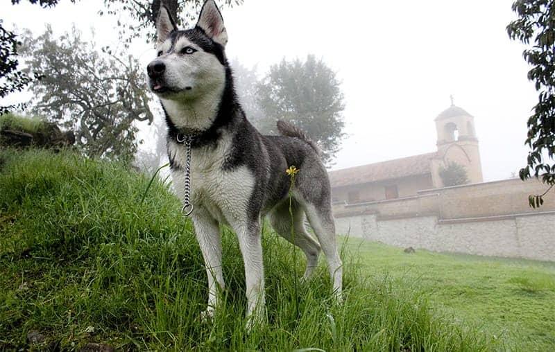 Russian Dog Names - dog in fog