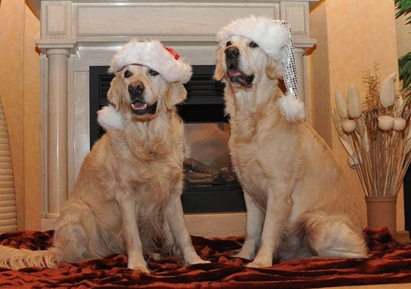 Christmas Dog Names