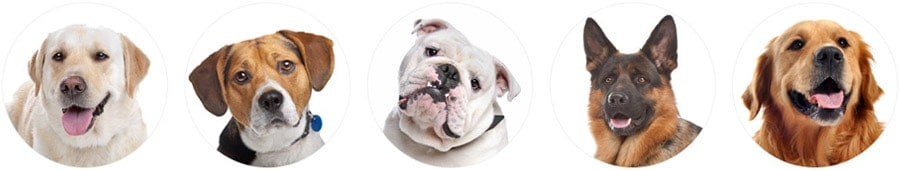 dog breed selector header