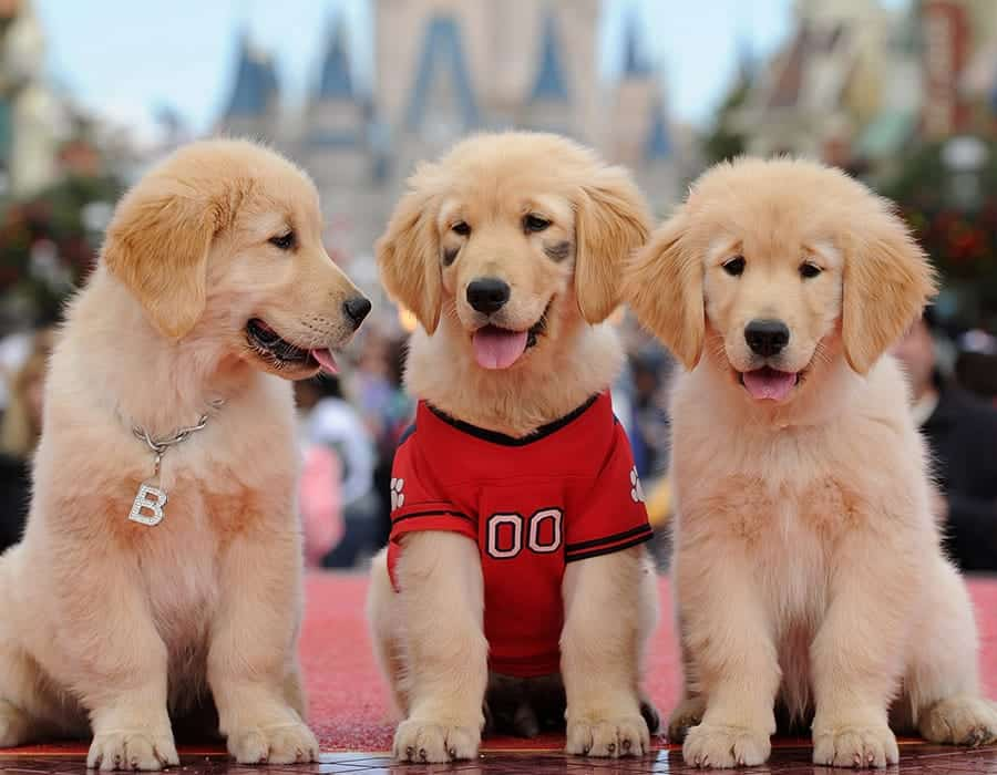 disney dog names - cute puppies
