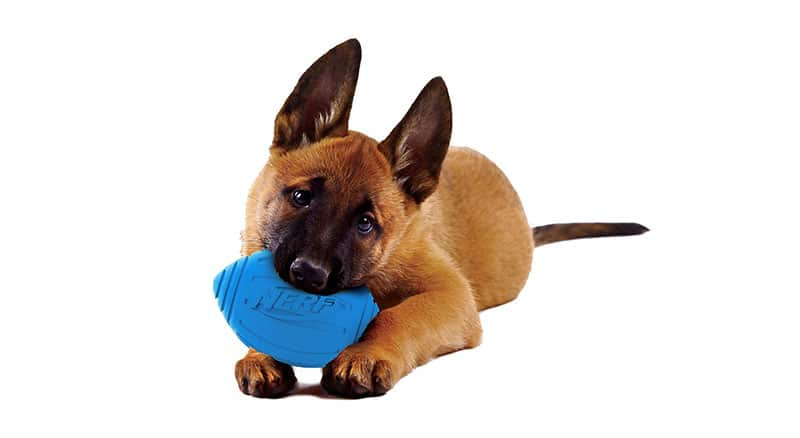 Best Outdoor Toys for Dogs