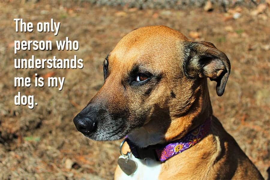 dog quote - the only person who understands me is my dog