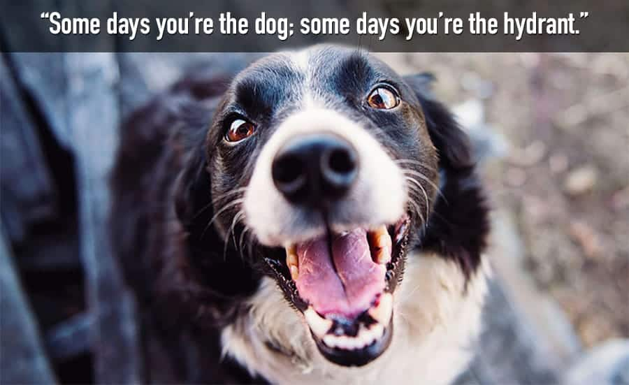 funny dog quote - some days youre the hydrant