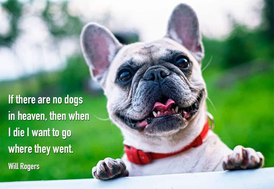 funny dog quotes - heaven