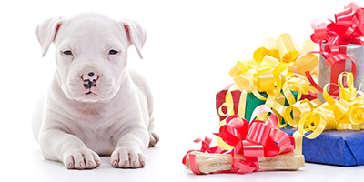 thumbnail - dog with gifts