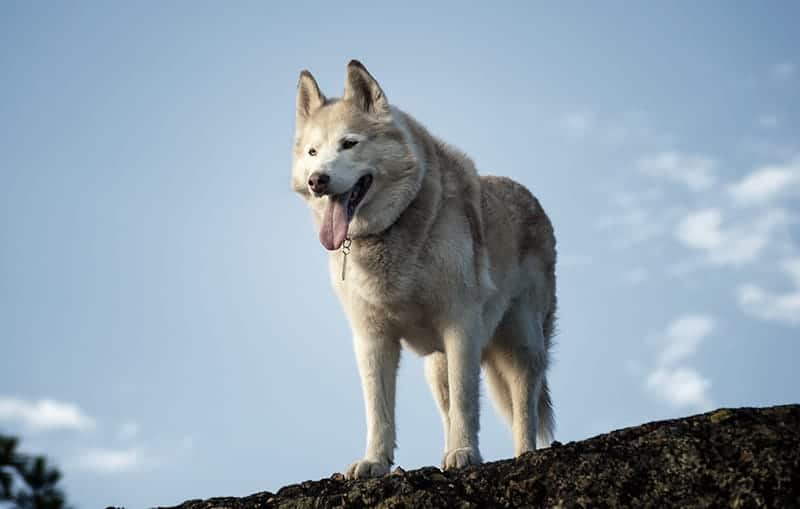 Dog on hill