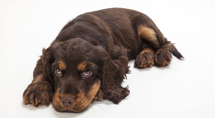 Unisex Dog Names