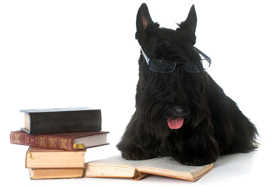 literary dog names - dog reading books