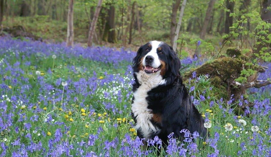 dog in wild flowers