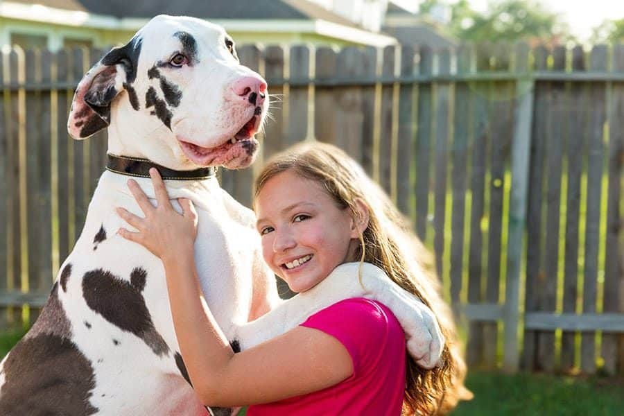 great dane with girl - child
