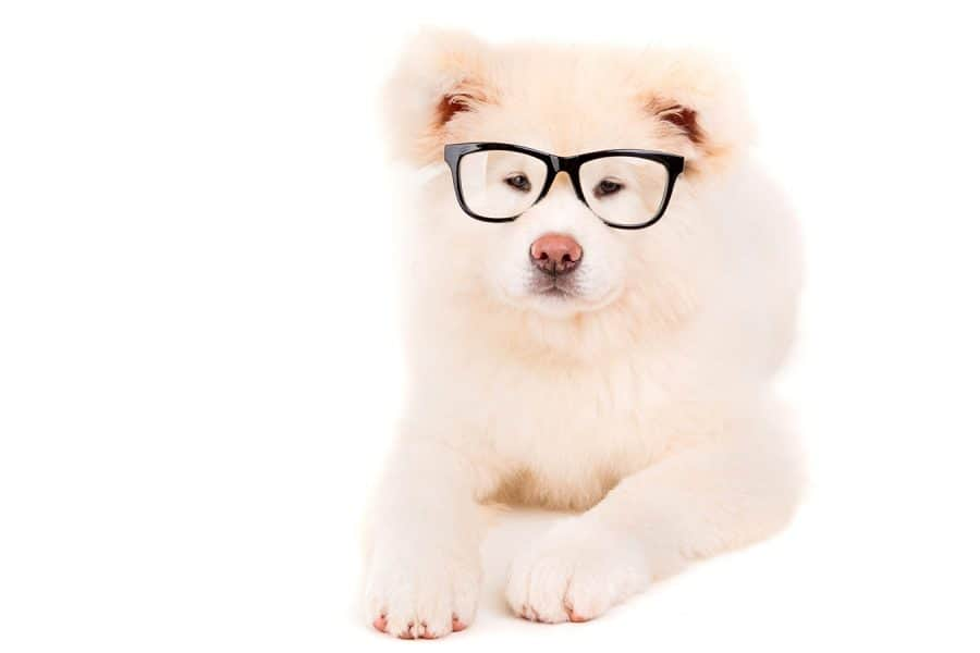 Hipster Dog Names - dog with glasses