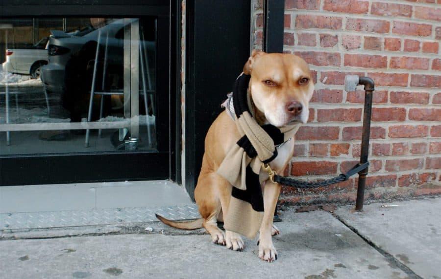 dog wearing scarf